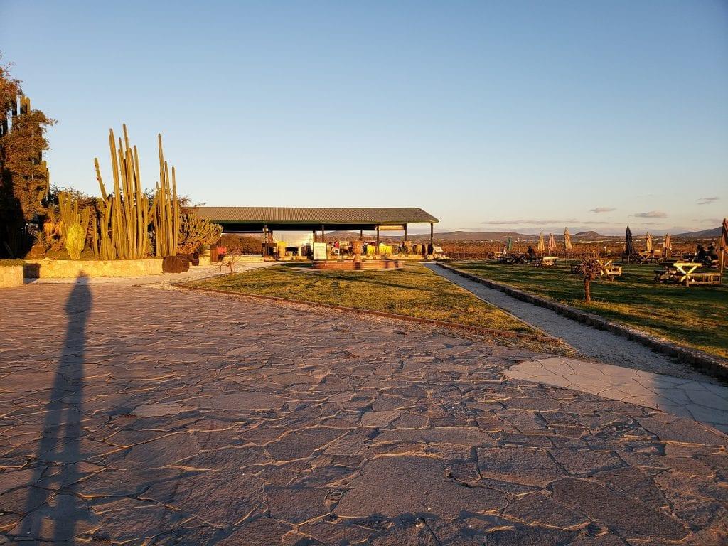 La Redonda… vid mexicana con origen francés