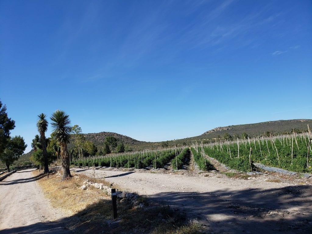 Rancho Tequis… mucho más allá de la elaboración de quesos