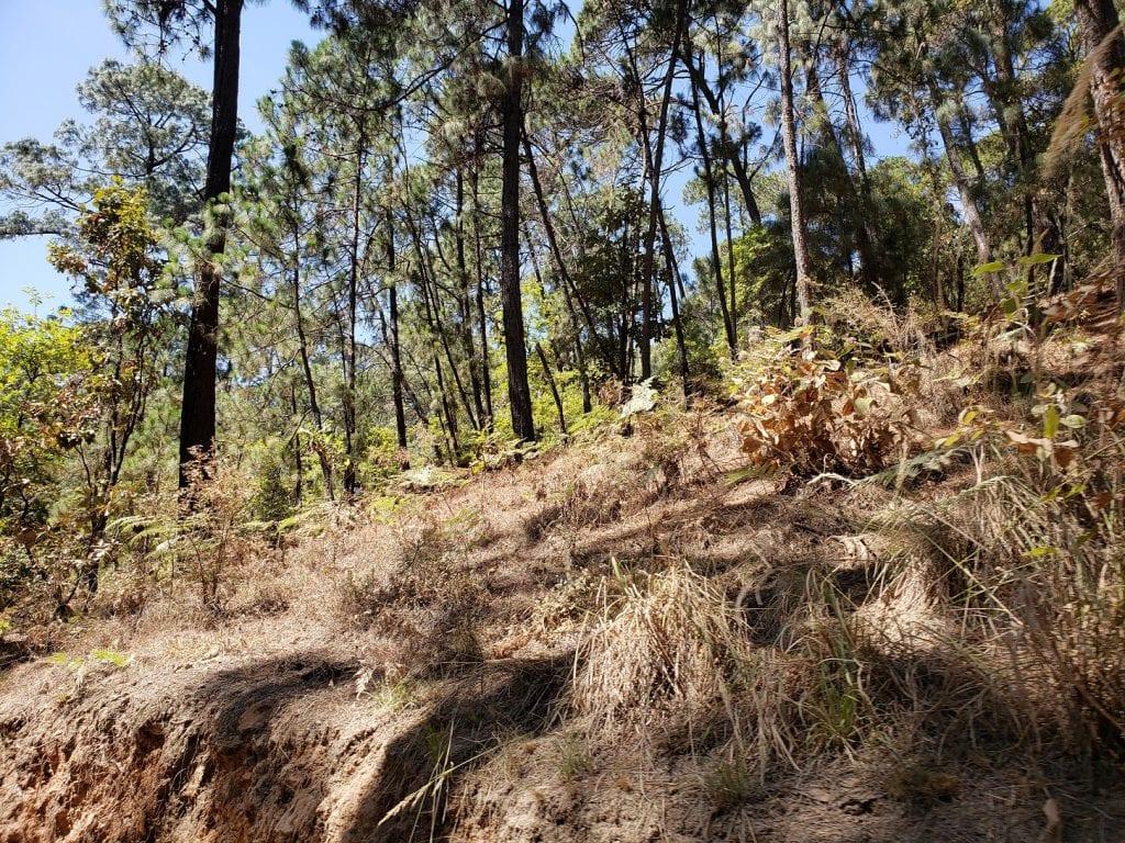 Parque Estatal Monte Alto… Reserva Ecológica