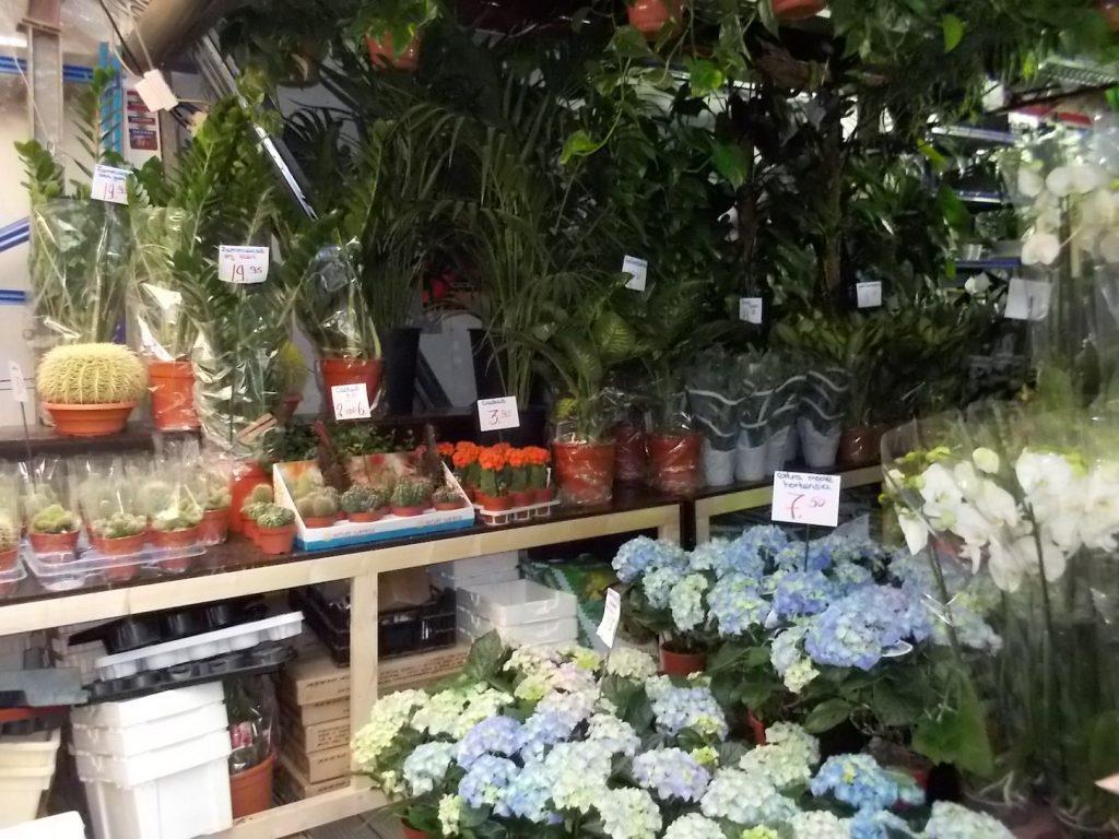 Mercado Flotante de Flores…  el famoso tulipán de los Países Bajos